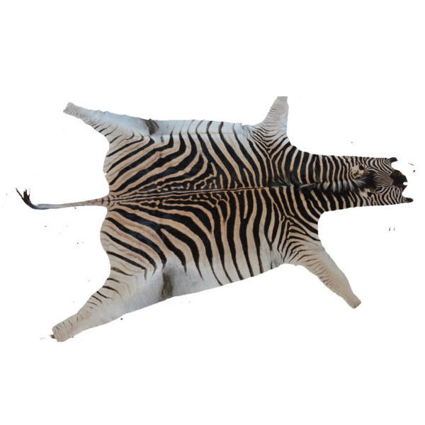 zebra skin in south africa